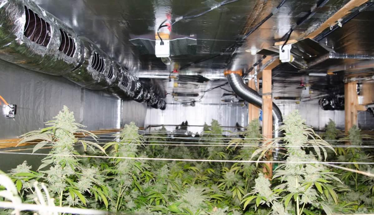 Marijuana Cultivation Grow House in Hillsborough County, Florida